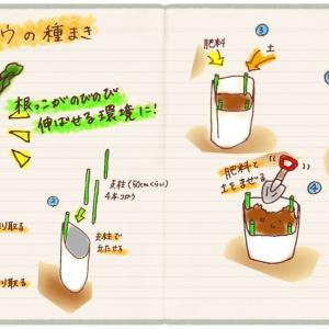 ゴボウの種まき(空になった肥料袋を再利用して畑づくり)