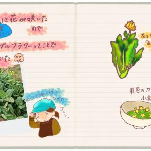 小松菜の花が咲いたので、エディブルフラワーとして食べたら美味しかった