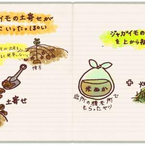 ジャガイモの土寄せが上手にできたっぽい記録