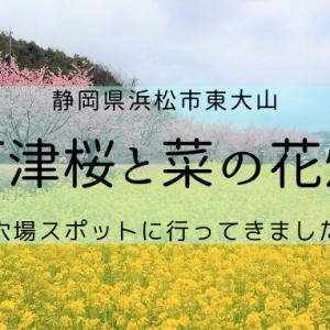 浜松市観光穴場スポット!東大山の河津桜と菜の花のコラボを見てきました