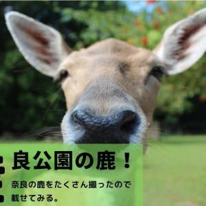 奈良公園周辺の鹿を撮ってきた