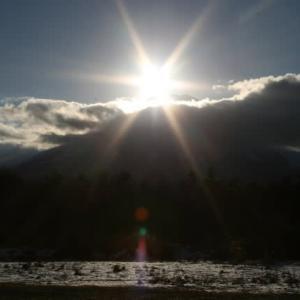 わんこと山中湖旅行🐕2日目 田貫湖 花の都公園