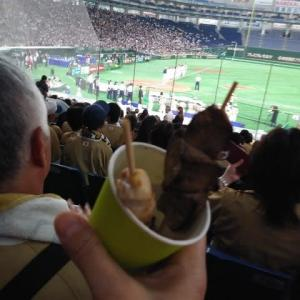 ソフトボール日米対抗戦 最終日 勝利