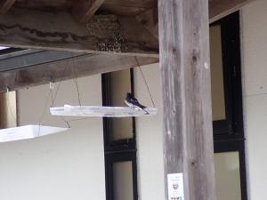 羽虫の観察