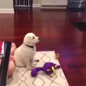 ディズニーに夢中になる子犬
