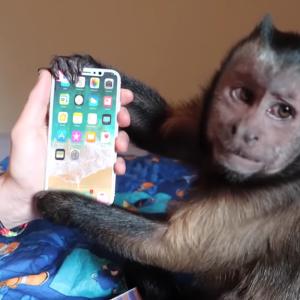 [新スタイルYoutuber] お猿さんがiPhoneXを開封