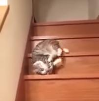 階段を液体のように滑り落ちるだらしない猫