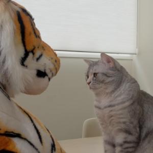 猫がトラと対面した結果・・・