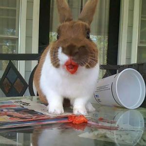 [閲覧注意] 動物たちがイチゴを食べる姿が怖すぎる・・・