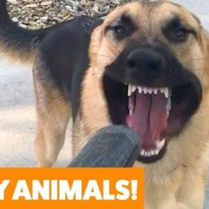 今週の動物おもしろ動画集