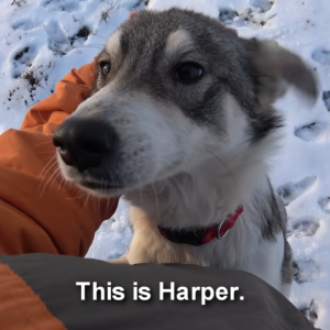 極寒の中で助けをずっと待ち続けた犬