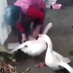 動物にも仲間を深く思いやる気持ちがあるということを教えてくれる動画