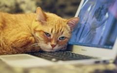 【オク・メルカリ】このノートパソコンいらないから売ろうと思うんだが相場いくらくらいになると思う?