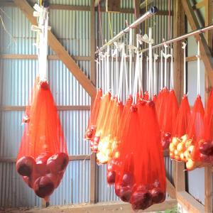 赤玉ねぎがいっぱいです。