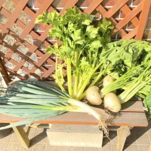 糸島野菜、収穫してきました♪