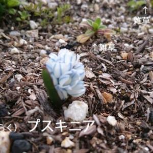 待ち遠しい植物の成長。