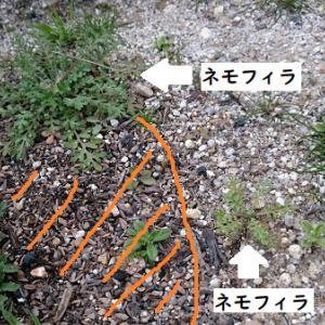 土は大事。カサカサの土と、ふかふかの土では成長が全然違う!