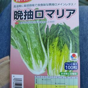 野菜のプランター栽培