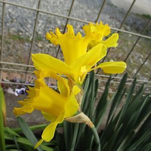 お庭の花たちと・・・