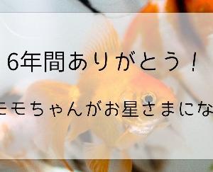 6年間ありがとう!金魚のモモちゃんがお星さまになりました