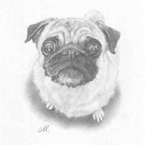 """【愛犬肖像画】完売御礼!PUGholic「""""うちの子""""鉛筆画」予約受付中"""