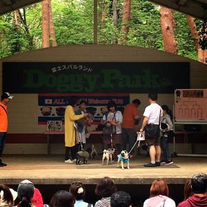 【体験報告】パグオフ会2019@河口湖富士すばるランド