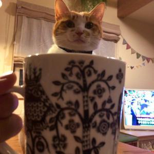 バターコーヒーダイエットあるある?