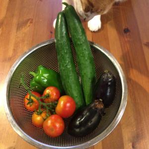トマト豊作