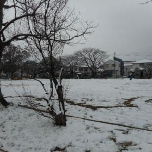 雪と不合格通知
