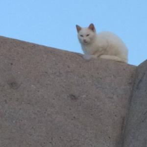画像>(ΦωΦ) 【ネコ】釣り場の猫様について語ろう【ヌコ】
