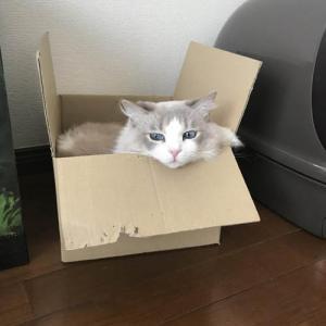 画像>(ΦωΦ) 我が家の猫が4歳になった(2)