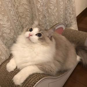 画像>(ΦωΦ) 我が家の猫が4歳になった(1)