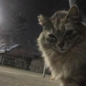画像>(ΦωΦ) 散歩中にノラ猫と戯れているんだが
