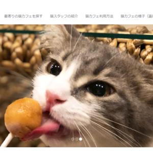 仕事も出来そうな猫カフェ♡【北海道|旭川・帯広】猫喫茶 空陸家