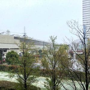 引篭生活にめぐみの雪と桜🌸