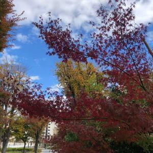 紅葉も色付く最高の三連休♫