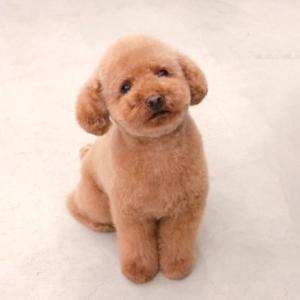 子犬を飼う時の注意事項:ペットショップで犬を購入するのは大変だ!(完)