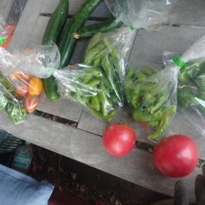 雨上がりなので、収穫に行きました。