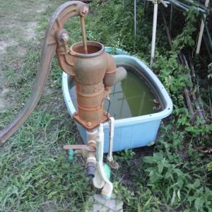 長い梅雨の後、干ばつだ~。