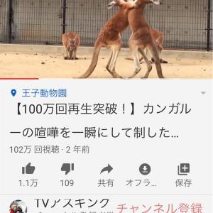 【YouTube】気がついたら100万回再生突破してました【カンガルー】