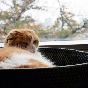 ネコとストーブ、冬支度。