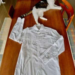 着なくなったシャツの再利用