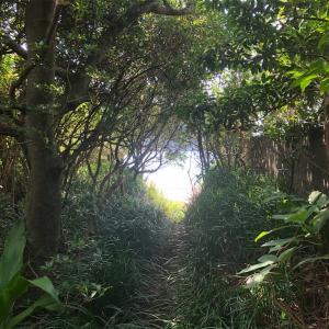 坊津の丸木浜に20年ぶりに行ったけど、2020年は営業中止でした...