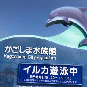 かごしま水族館 いおワールド 屋外水路でイルカを見た!!