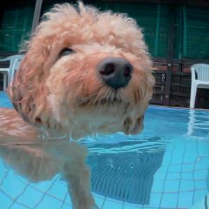 愛犬をアクションカメラでプール水中から撮影