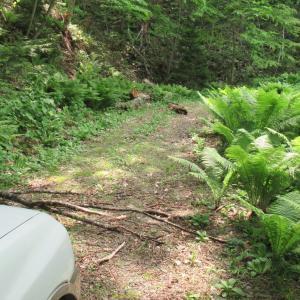 湖畔林道から旧美幌峠へ