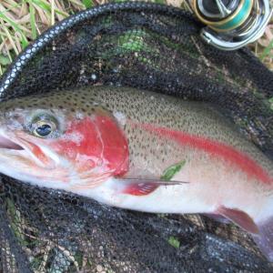 道東河川・秋の良釣行の季節到来