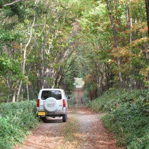 森のトンネル・札友内林道(弟子屈町)