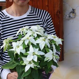 【小さなお花屋OPEN】11月11日~13日です♪