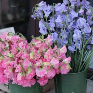 【今月の花屋】今日はスイトピーの日